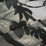 慈雲寺的日子-出家生活思索
